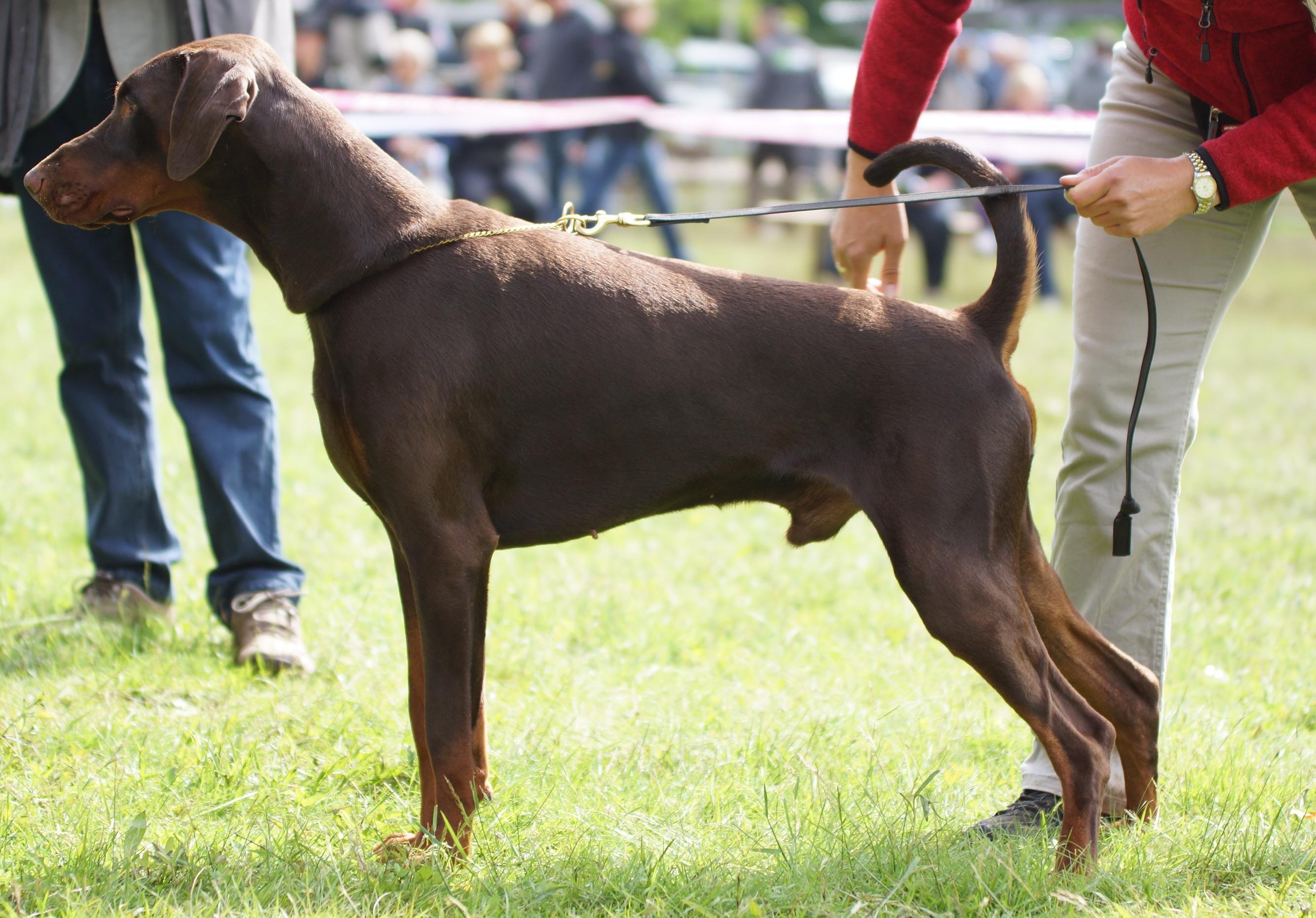 National dog show Koszalin, Polen