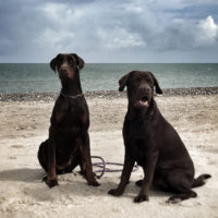 Dobergaarden_Forever_Xina_and_basse
