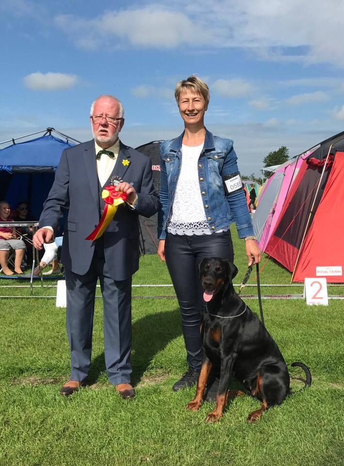 CACIB Danish Kennel Club, Vejen, day 2