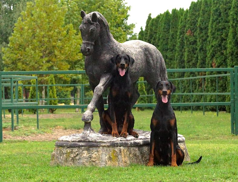 Photos of the day ***Dobergaarden Forever Una and Quicha***