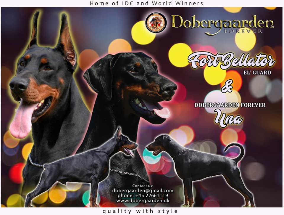 Dobergaarden Forever Una have got 9 lovely puppies
