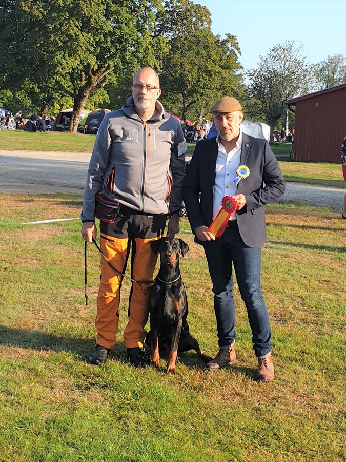 Second day of West Coast CACIB Dog Show in Sweden